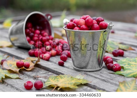 Fresh cranberries in a small decorative buckets with autumn leaves  - stock photo
