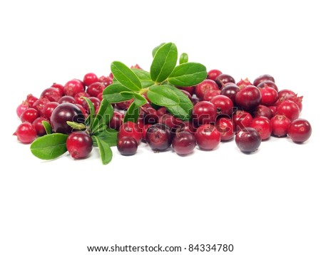 fresh cranberries on a white background - stock photo