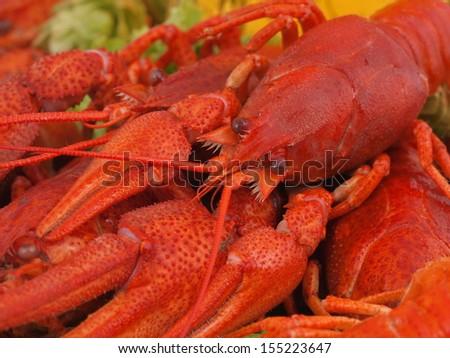 Fresh crawfish - stock photo