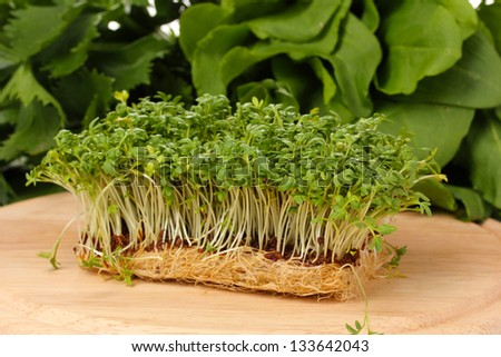 Fresh cress salad on wooden board - stock photo