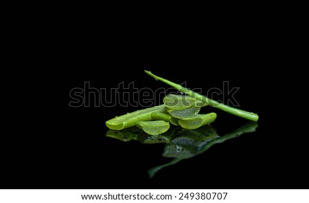 Fresh cut aloe vera leaf isolated in black background - stock photo