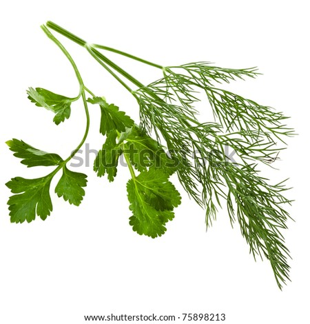 fresh dill and parsley green isolated on white - stock photo