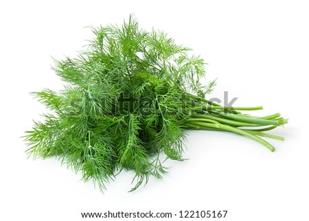 Fresh Dill (herb)  bunch. Isolated on white - stock photo
