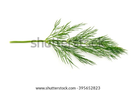 fresh dill on white background - stock photo