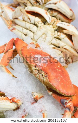 Fresh Dungeness crab on ice at the market - stock photo