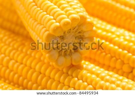 Fresh ear of corn - stock photo