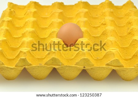 fresh egg in pater tray - stock photo