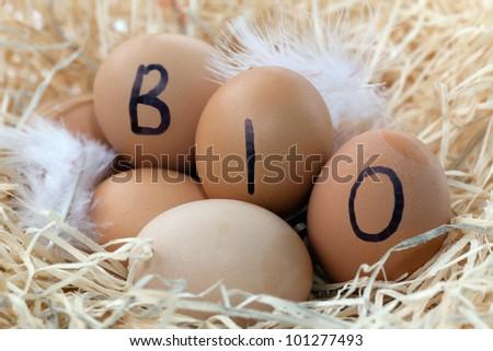 Fresh farm eggs at the farmer market. - stock photo
