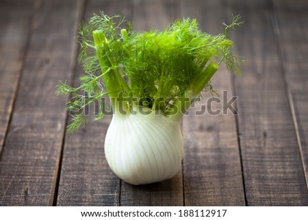 fresh fennel full of vitamins and fibers - stock photo