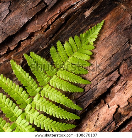 Fresh fern border on bark background - stock photo