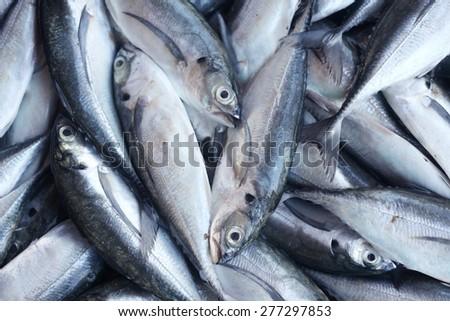 fresh fish as background. - stock photo