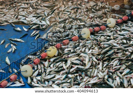 Fresh fish caught with a fishing net - stock photo