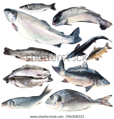 Fresh fish collage, isolated on white - stock photo