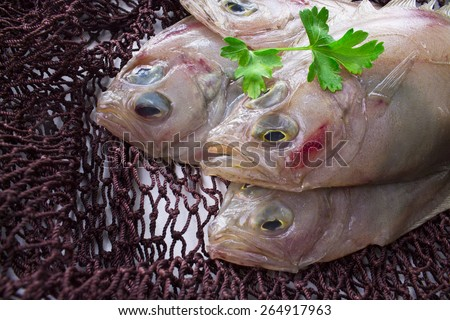 fresh fish in fishing net - stock photo