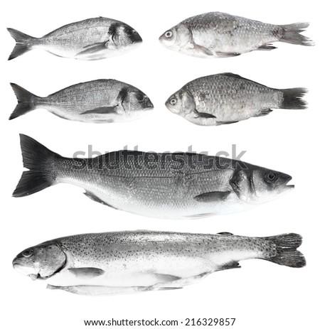 Fresh fish isolated on white - stock photo