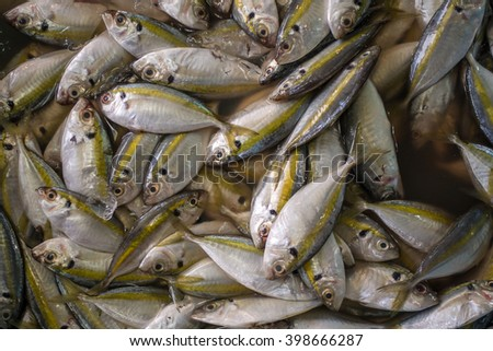 Fresh Fish on display at a market. Top down view. - stock photo