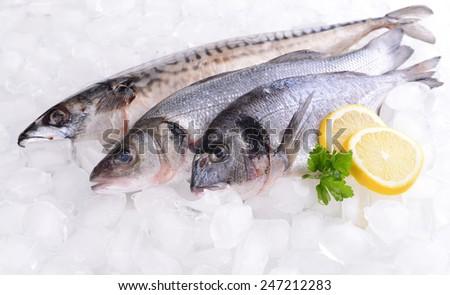 Fresh fish on ice - stock photo
