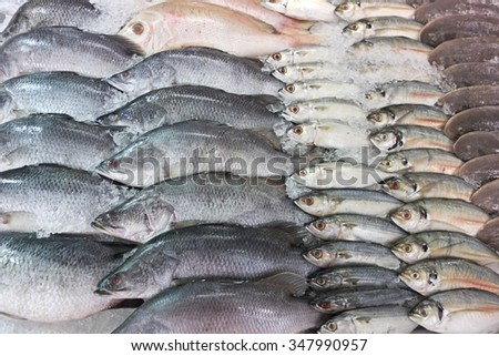 fresh fish on ice at the market - stock photo
