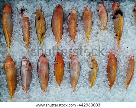 Fresh fish on ice, convenience store. - stock photo