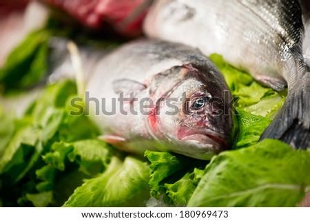 Fresh fish on the market - stock photo