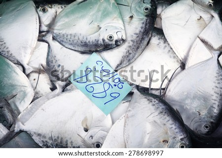 fresh fish with price tag - stock photo