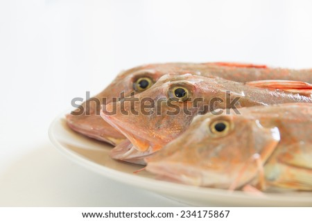 Fresh fish  with red scales  open mouth on white plate close up - stock photo