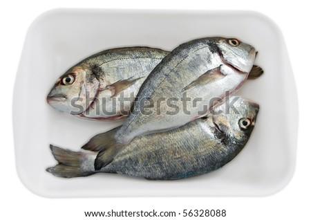 Fresh fishes. - stock photo