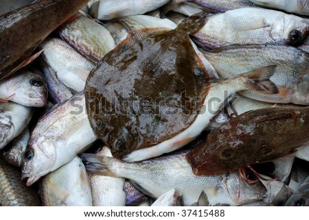 Fresh fishes as background - stock photo