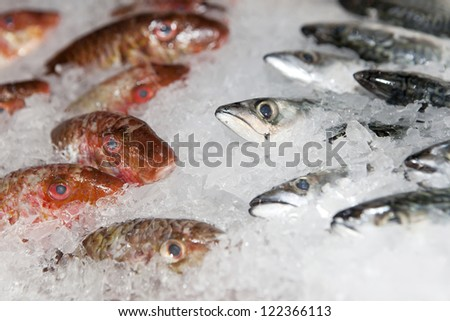 Fresh fishes on ice in open market - stock photo