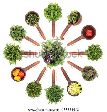 Fresh flavoring herbs and spices in ceramic scoops. Isolated on white background - stock photo