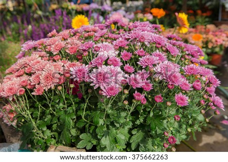 Fresh flowers are placed on the market. - stock photo