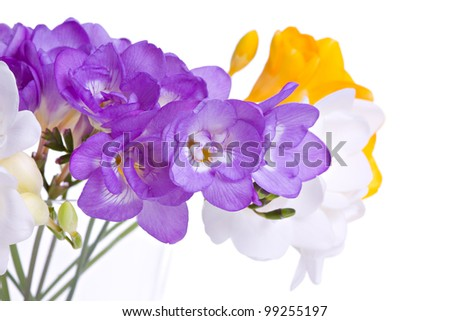 Fresh fresia flowers in vase isolated over white background - stock photo