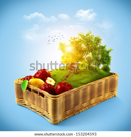 Fresh fruits in the basket. Summer collage - stock photo