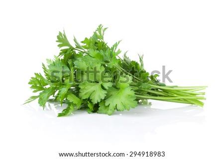 Fresh garden herbs. Parsley. Isolated on white background - stock photo
