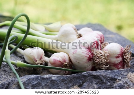 Fresh garlic on a wooden board painted - stock photo