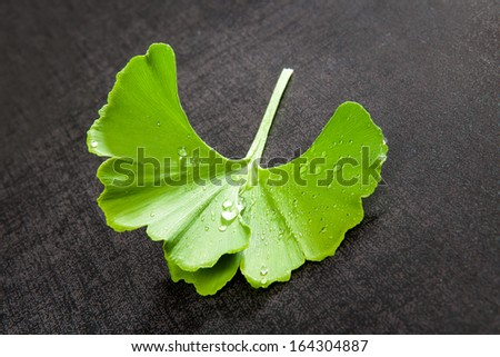 Fresh ginkgo leaf with water drops on black background. Natural healthy food supplement. - stock photo