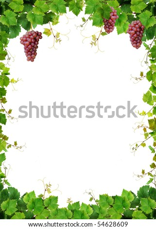 Fresh grapevine frame with pink grapes, isolated on white background - stock photo
