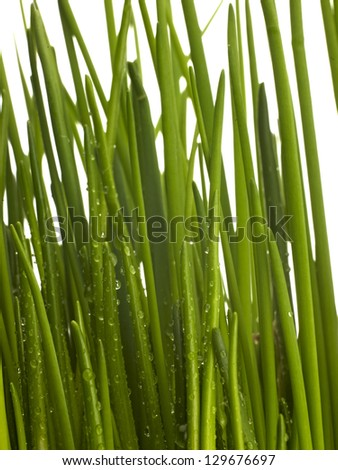 Fresh Grass, Dew Drops, Close Up, chive, Water drops on grass - stock photo