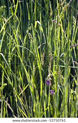 fresh grass in beautiful light at the meadow - stock photo