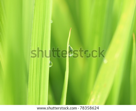 Fresh grass with dew drops - stock photo