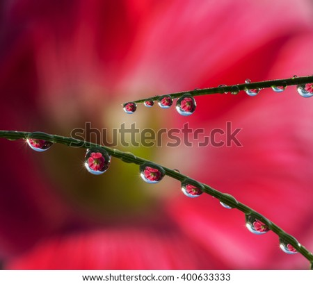 Fresh grass with dew drops and Sun beams on large flower background - stock photo