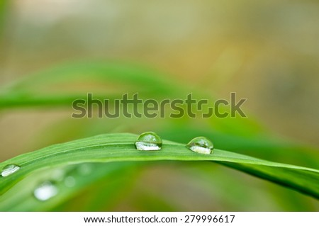 Fresh grass with dew drops close up. Selective focus, some drops in focus and some not. - stock photo