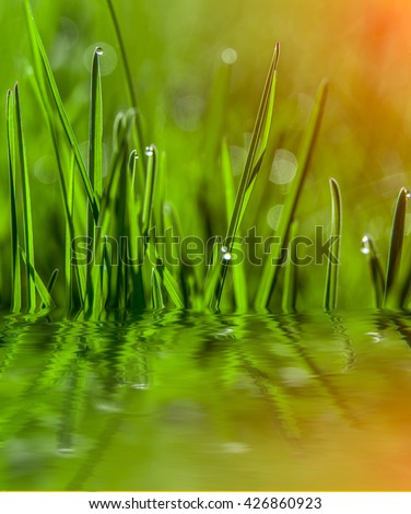 Fresh grass with dew drops closeup. reflected in the water. Nature Background. creative image - stock photo
