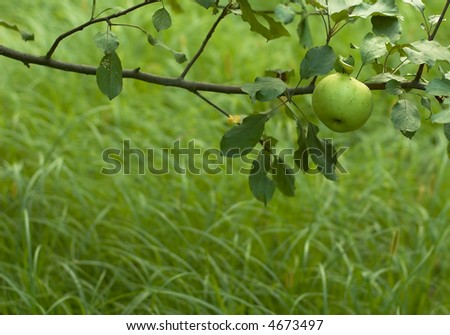 fresh green apple theme with space left for text - stock photo