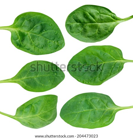 Fresh green baby spinach leaves isolated on white  - stock photo