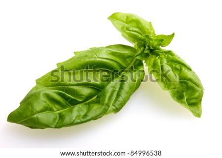 fresh green basil isolated on white - stock photo