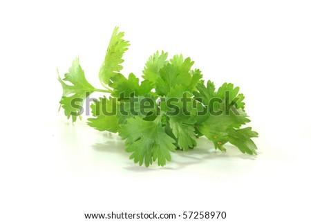 Fresh green coriander on a white background - stock photo