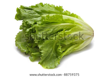 Fresh green endive on white - stock photo