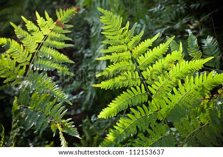 Fresh green fern forest background - stock photo