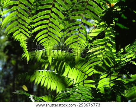 Fresh green fern leaves in evening light - stock photo